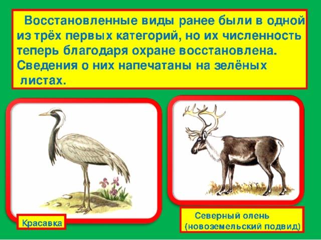 Редкие виды встречаются в небольшом количестве или на ограниченных территориях и вскоре могут исчезнуть. Они занесены на белые страницы. Скопа Северный олень (лесной подвид)