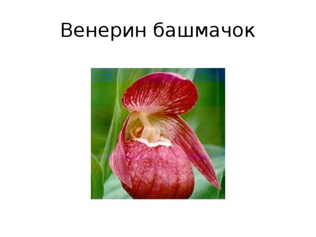 «Встреча с Красной книгой»