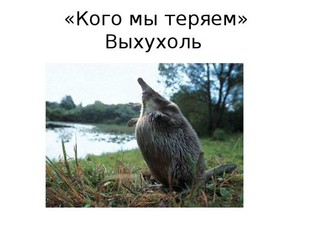 По страницам Красной книги Алтайского края»