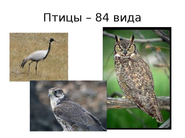 Птицы – 84 вида