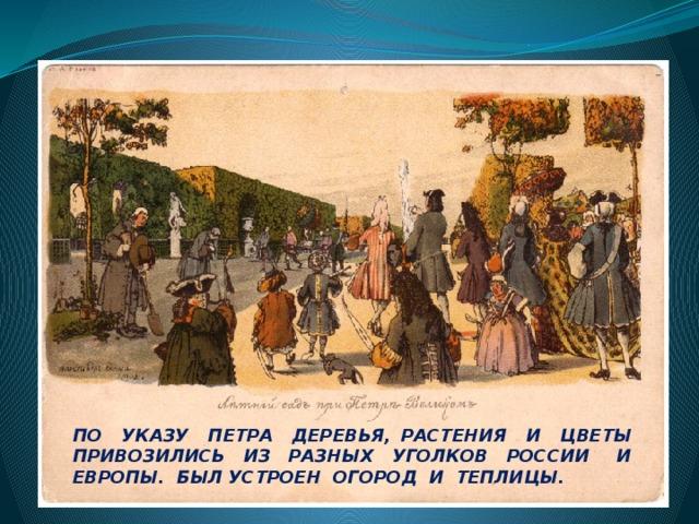 ПО УКАЗУ ПЕТРА ДЕРЕВЬЯ, РАСТЕНИЯ И ЦВЕТЫ ПРИВОЗИЛИСЬ ИЗ РАЗНЫХ УГОЛКОВ РОССИИ И ЕВРОПЫ. БЫЛ УСТРОЕН ОГОРОД И ТЕПЛИЦЫ.