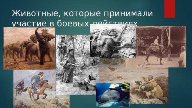 Животные, которые принимали участие в боевых действиях