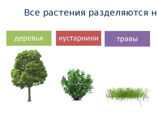 Все растения разделяются на: