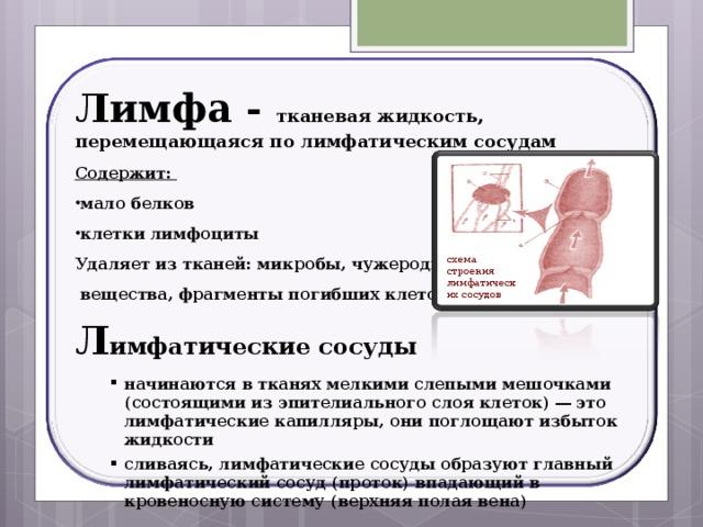Лимфа - тканевая жидкость, перемещающаяся по лимфатическим сосудам Содержит: мало белков клетки лимфоциты Удаляет из тканей: микробы, чужеродные  вещества, фрагменты погибших клеток. Л имфатические сосуды начинаются в тканях мелкими слепыми мешочками (состоящими из эпителиального слоя клеток) ― это лимфатические капилляры, они поглощают избыток жидкости сливаясь, лимфатические сосуды образуют главный лимфатический сосуд (проток) впадающий в кровеносную систему (верхняя полая вена) начинаются в тканях мелкими слепыми мешочками (состоящими из эпителиального слоя клеток) ― это лимфатические капилляры, они поглощают избыток жидкости сливаясь, лимфатические сосуды образуют главный лимфатический сосуд (проток) впадающий в кровеносную систему (верхняя полая вена) схема строения лимфатических сосудов 18