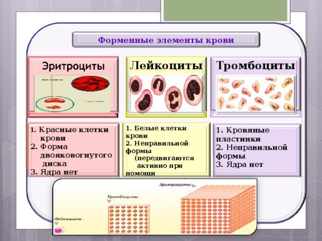 Форменные элементы крови Тромбоциты Лейкоциты       1. Белые клетки крови 2. Неправильной формы  (передвигаются  активно при помощи  ложноножек) 3. Есть ядро 1 . Красные клетки  крови 2. Форма  двояковогнутого диска 3. Ядра нет 1. Кровяные пластинки 2. Неправильной формы 3. Ядра нет 28