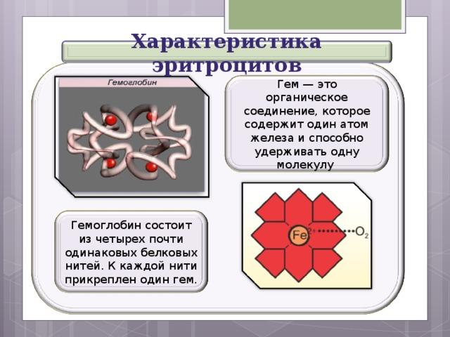Характеристика эритроцитов Гем — это органическое соединение, которое содержит один атом железа и способно удерживать одну молекулу Гемоглобин состоит из четырех почти одинаковых белковых нитей. К каждой нити прикреплен один гем.