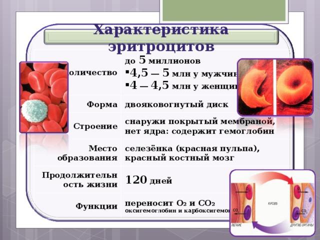 Характеристика эритроцитов Количество до 5 миллионов Форма 4,5 ― 5 млн у мужчин 4 ― 4,5 млн у женщин двояковогнутый диск Строение снаружи покрытый мембраной, нет ядра: содержит гемоглобин Место образования Продолжительность жизни селезёнка (красная пульпа), красный костный мозг Функции 120 дней переносит О 2 и СО 2 оксигемоглобин и карбоксигемоглобин 30