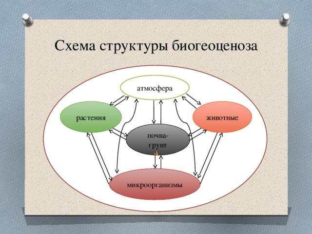 атмосфера Схема структуры биогеоценоза животные растения почва-грунт микроорганизмы
