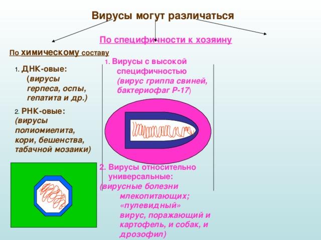 Вирусы могут различаться По специфичности к хозяину По химическому составу 1. Вирусы с высокой специфичностью   (вирус гриппа свиней, бактериофаг Р-17 ) 1 . ДНК-овые: ( вирусы герпеса, оспы, гепатита и др.)  2 . РНК-овые:  (вирусы полиомиелита, кори, бешенства, табачной мозаики) 2. Вирусы относительно  универсальные:  (вирусные болезни  млекопитающих;  «пулевидный»  вирус, поражающий и  картофель, и собак, и  дрозофил)
