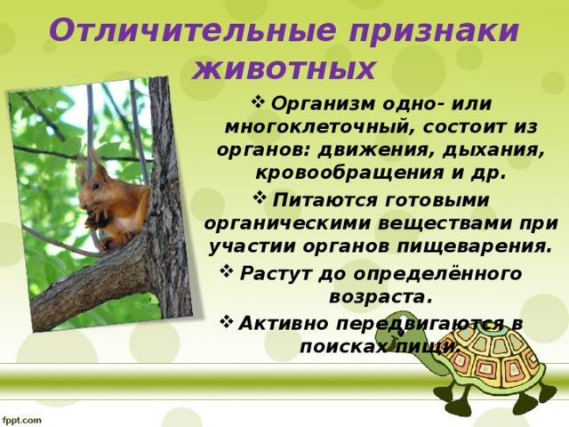 Отличительные признаки животных