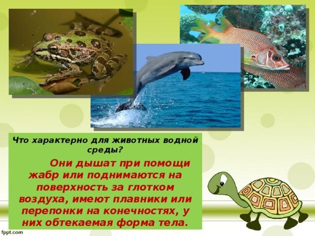 Что характерно для животных водной среды?  Они дышат при помощи жабр или поднимаются на поверхность за глотком воздуха, имеют плавники или перепонки на конечностях, у них обтекаемая форма тела.