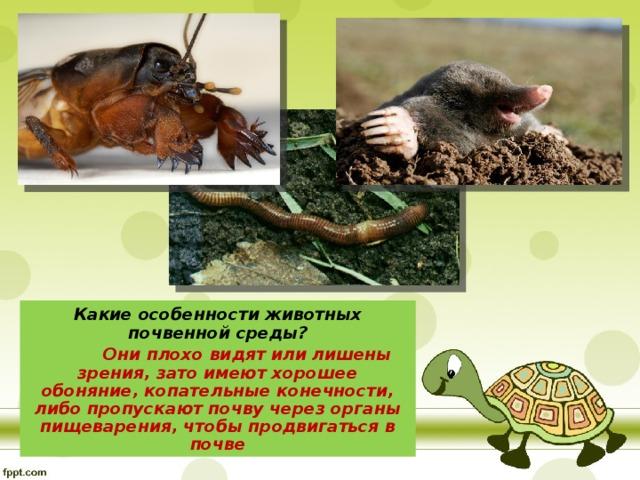 Какие особенности животных почвенной среды?  Они плохо видят или лишены зрения, зато имеют хорошее обоняние, копательные конечности, либо пропускают почву через органы пищеварения, чтобы продвигаться в почве