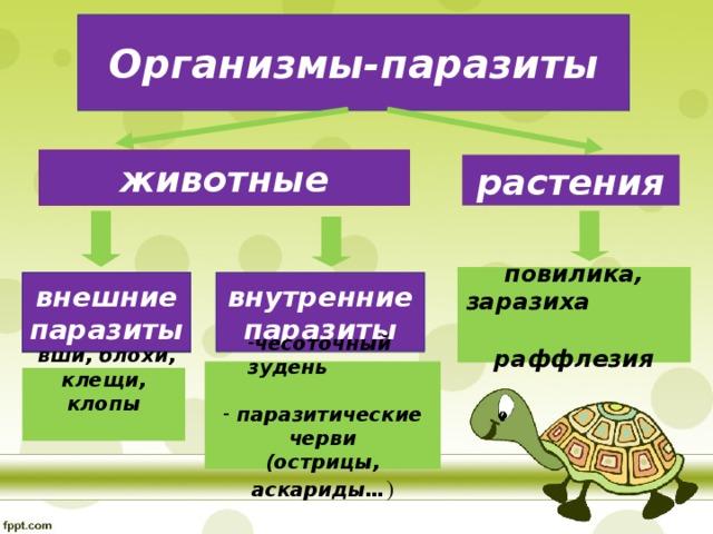 Организмы-паразиты животные растения повилика, заразиха раффлезия внешние паразиты внутренние паразиты внешние паразиты чесоточный зудень чесоточный зудень  паразитические черви (острицы, аскариды… )  вши, блохи, клещи, клопы