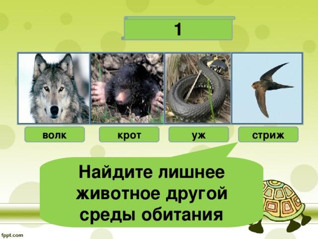 1 волк крот уж стриж Найдите лишнее животное другой среды обитания