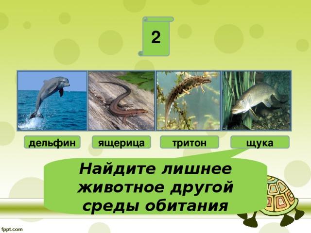 2 дельфин ящерица тритон щука Найдите лишнее животное другой среды обитания