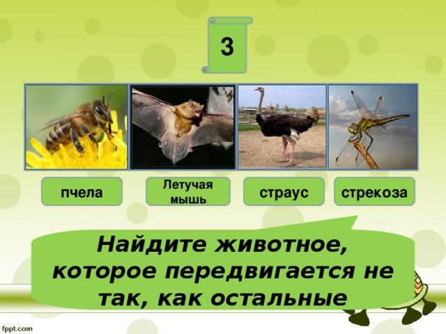 3 пчела Летучая мышь страус стрекоза Найдите животное, которое передвигается не так, как остальные