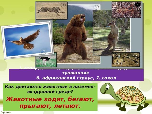 7 1. гепард, 2. медведь, кузнечик, 4. кенгуру, 5. тушканчик  6. африканский страус, 7. сокол Как двигаются животные в наземно-воздушной среде? Животные ходят, бегают, прыгают, летают.