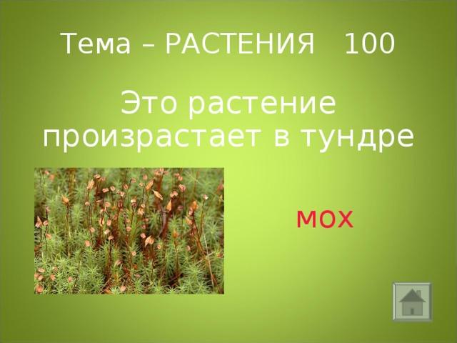 Тема – РАСТЕНИЯ 100 Это растение произрастает в тундре  мох