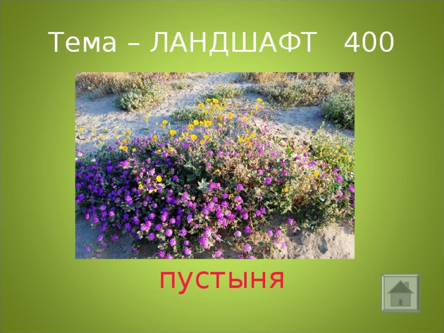Тема – ЛАНДШАФТ 400 пустыня