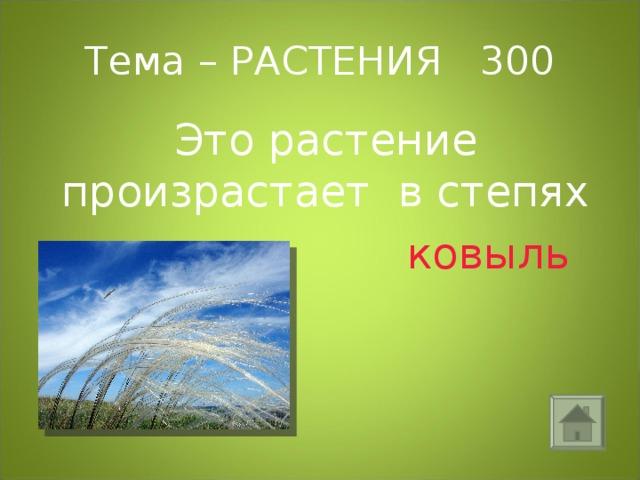 Тема – РАСТЕНИЯ 300 Это растение произрастает в степях  ковыль