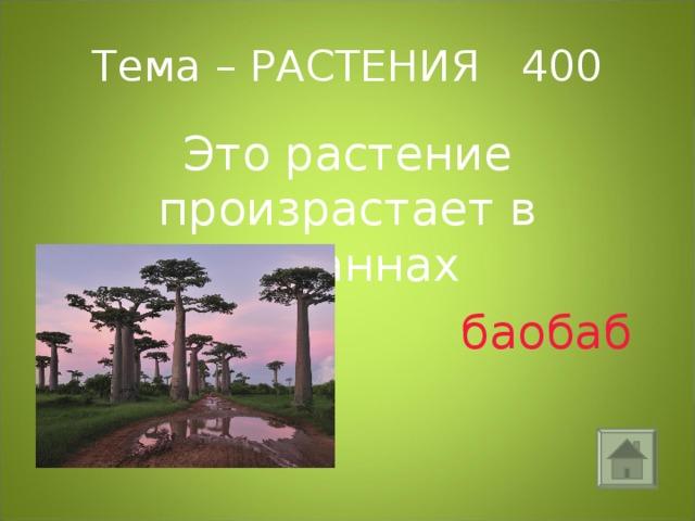 Тема – РАСТЕНИЯ 400 Это растение произрастает в саваннах  баобаб