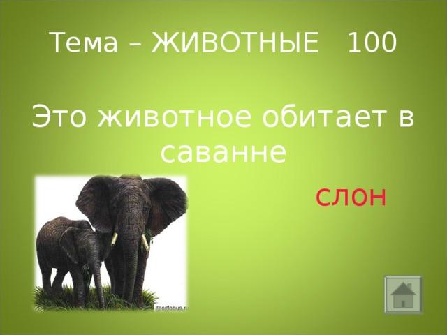 Тема – ЖИВОТНЫЕ 100 Это животное обитает в саванне  слон