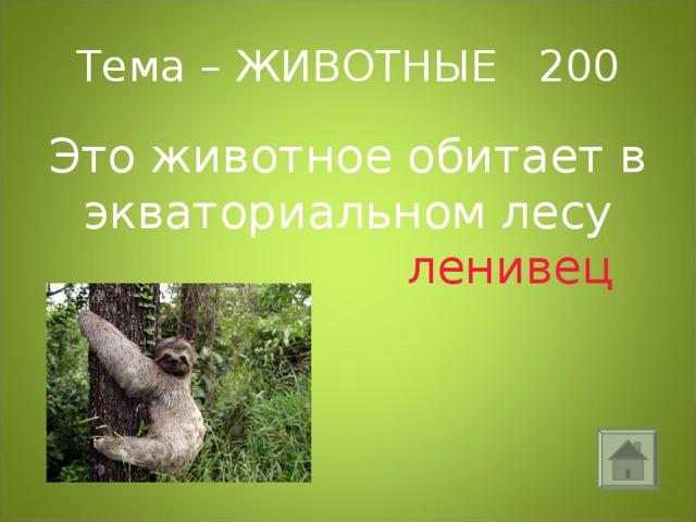 Тема – ЖИВОТНЫЕ 200 Это животное обитает в экваториальном лесу  ленивец