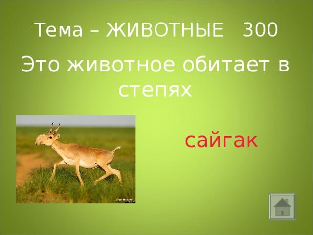 Тема – ЖИВОТНЫЕ 300 Это животное обитает в степях  сайгак