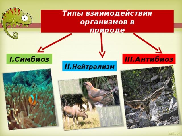 Типы взаимодействия организмов в  природе I .Симбиоз III .Антибиоз II .Нейтрализм