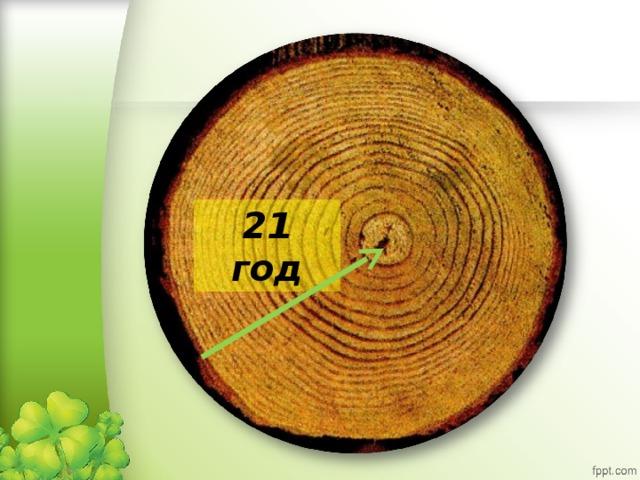 По годичным кольцам можно: 1.Подсчитать возраст дерева или побега 2.Определить в каких условиях жило растение 3.Установить колебания погодных условий за многие годы