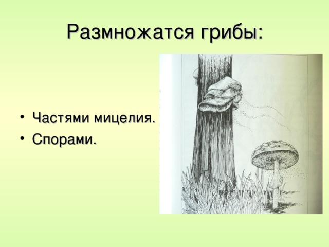 Размножатся грибы: