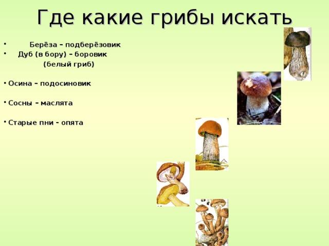 Где какие грибы искать  Берёза – подберёзовик  Дуб (в бору) – боровик  (белый гриб)  Осина – подосиновик  Сосны – маслята