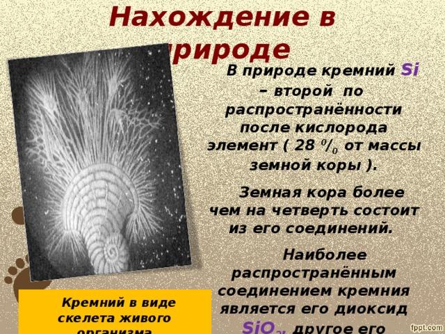 Нахождение в природе  В природе кремний Si – второй по распространённости после кислорода элемент ( 28 0 / 0 от массы земной коры ).  Земная кора более чем на четверть состоит из его соединений.  Наиболее распространённым соединением кремния является его диоксид SiO 2 , другое его название – кремнезём.     Кремний в виде скелета живого организма