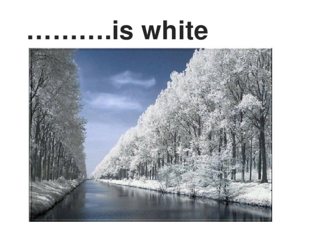 ……… .is white