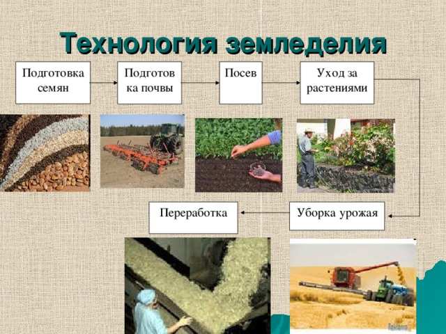 Технология земледелия Подготовка почвы Посев Уход за растениями Подготовка семян Переработка Уборка урожая