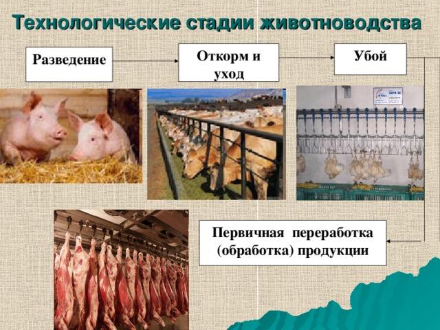 Технологические стадии животноводства  Откорм и уход Убой Разведение Первичная переработка (обработка) продукции
