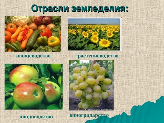 Отрасли земледелия: овощеводство растениеводство виноградарство плодоводство