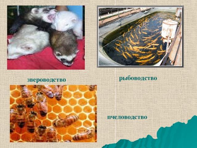 рыбоводство звероводство пчеловодство