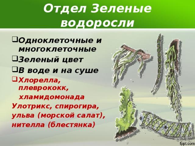 Отдел Зеленые водоросли Одноклеточные и многоклеточные Зеленый цвет В воде и на суше Хлорелла, плеврококк,  хламидомонада Улотрикс, спирогира, ульва (морской салат), нителла (блестянка)