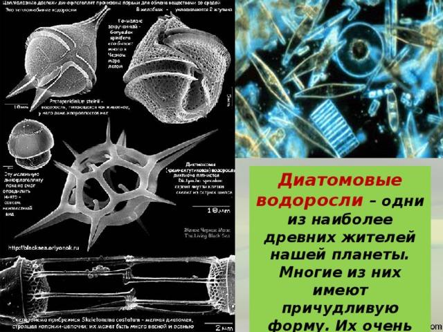 Диатомовые водоросли – одни из наиболее древних жителей нашей планеты. Многие из них имеют причудливую форму. Их очень много в верхних слоях мирового океана.