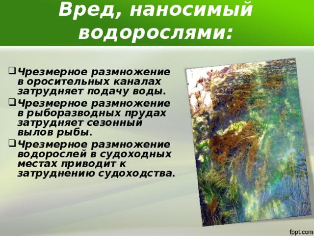 Вред, наносимый водорослями: Чрезмерное размножение в оросительных каналах затрудняет подачу воды. Чрезмерное размножение в рыборазводных прудах затрудняет сезонный вылов рыбы. Чрезмерное размножение водорослей в судоходных местах приводит к затруднению судоходства.