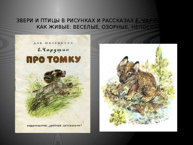 Звери и птицы в рисунках и рассказах Е.Чарушина как живые: веселые, озорные, непослушные.