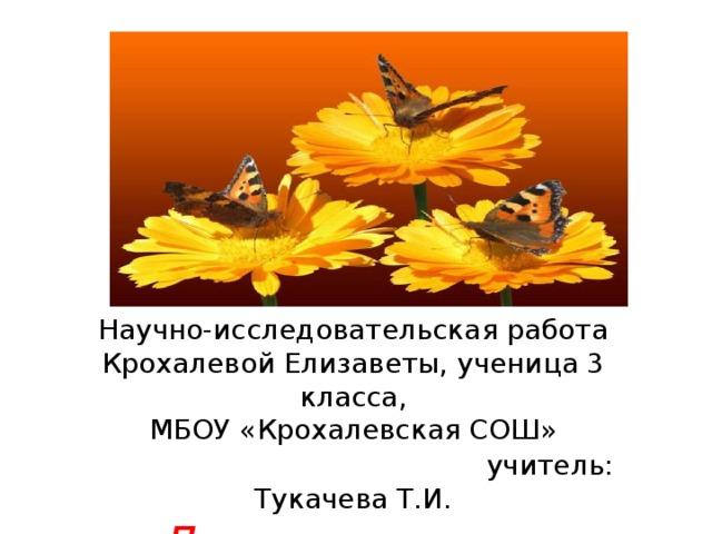 Научно-исследовательская работа Крохалевой Елизаветы, ученица 3 класса, МБОУ «Крохалевская СОШ»  учитель: Тукачева Т.И. Лекарственное растение