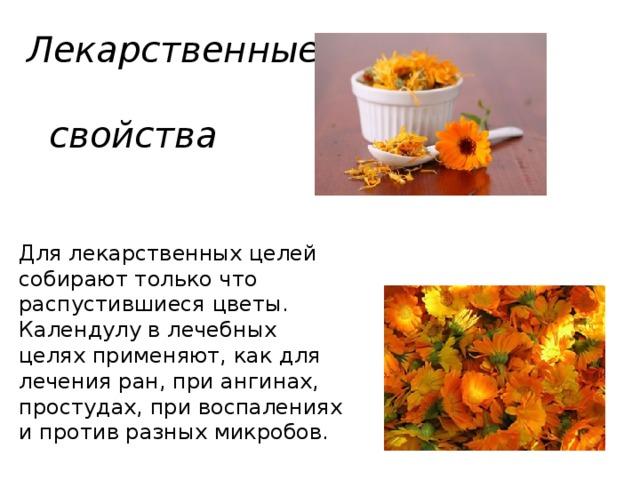 Лекарственные  свойства Для лекарственных целей собирают только что распустившиеся цветы. Календулу в лечебных целях применяют, как для лечения ран, при ангинах, простудах, при воспалениях и против разных микробов.