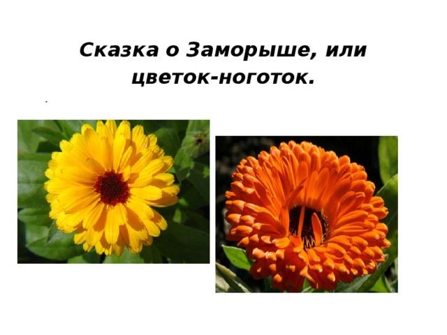 Сказка о Заморыше, или цветок-ноготок. .
