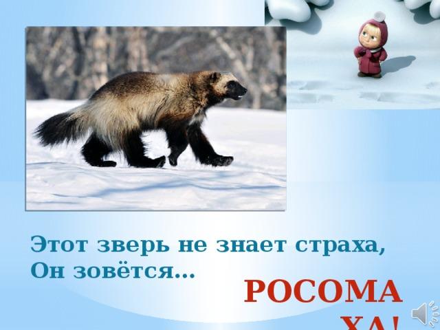 Этот зверь не знает страха, Он зовётся…  РОСОМАХА!