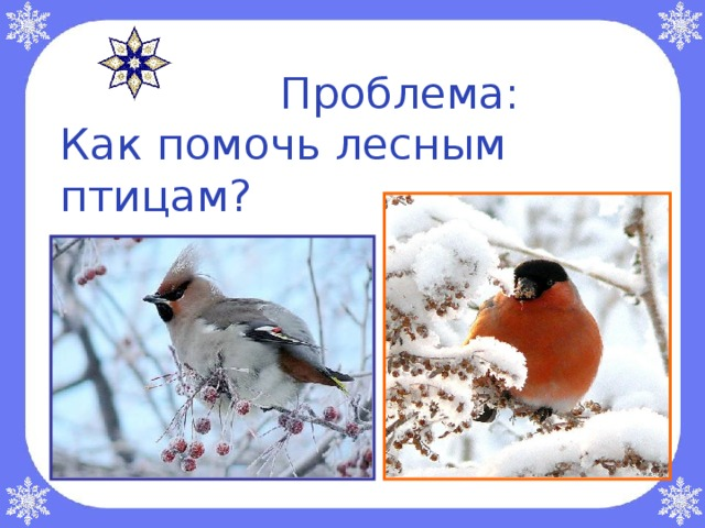 Проблема:  Как помочь лесным птицам ?