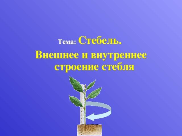 Тема:  Стебель. Внешнее и внутреннее строение стебля