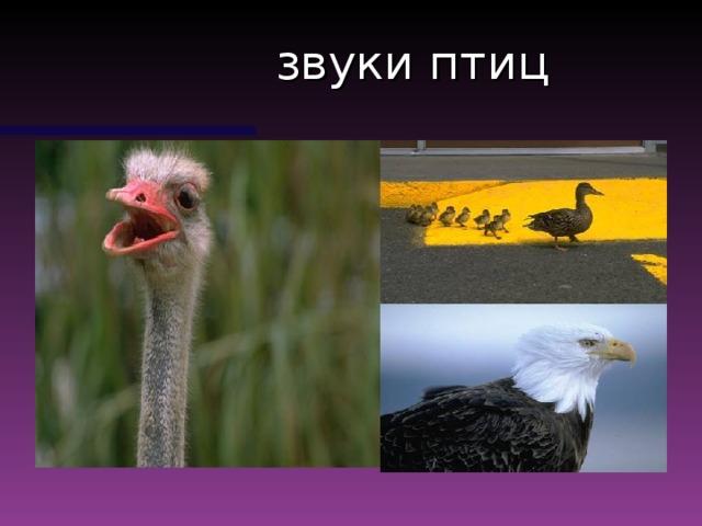 звуки птиц
