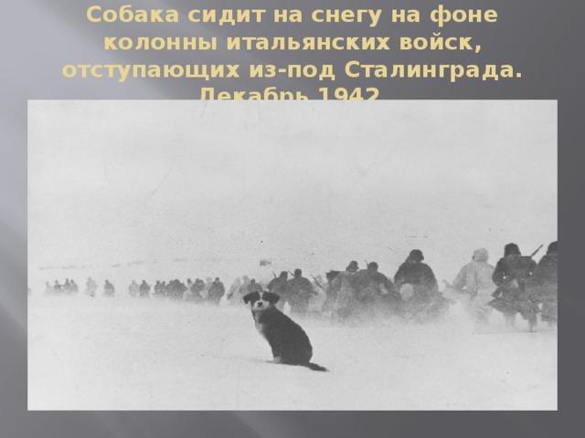 Собака сидит на снегу на фоне колонны итальянских войск, отступающих из-под Сталинграда. Декабрь 1942